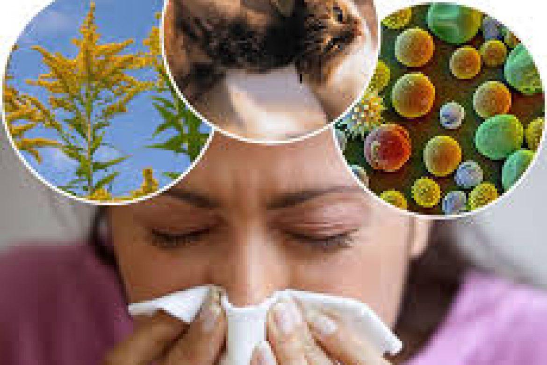Allergy Liquid Herbal Extracts by Karen Morris